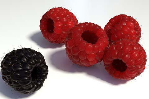berries-1200533__340 2